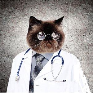 Cat dr